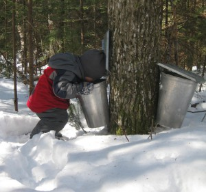 Photo of Braedyn looking into buckets to see if there is sap yet.