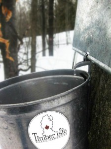 Sap drips at Timber Isle Maple Products